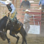 Fair Rodeo Results