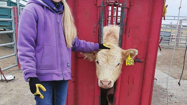 4-H, FFA members register market beef for the 2021 County Fair